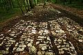 Faverolles - Troçon de voie romaine face à l'emplacement du mausolée Gallo-Romain.jpg