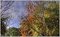 Feeling Like Fall (132954361).jpeg
