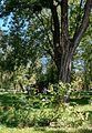 Fehérgyarmat, Hungary - panoramio (19).jpg