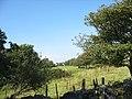Fferm Bryngwyn Farm - geograph.org.uk - 358359.jpg