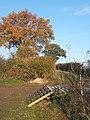Field corner near Badley track with autumnal tree - geograph.org.uk - 613826.jpg