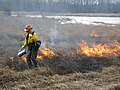 Fire biologist lights controlled burn (6022164769).jpg