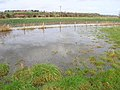 Flooded Field, Brede Level - geograph.org.uk - 361984.jpg