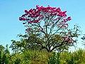 Flor rosa - panoramio.jpg