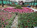 Floral Boat model from Lalbagh flower show Aug 2013 7869.JPG