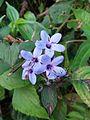 Flowers5.jpg