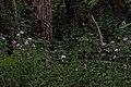 Flowers Beside Trail.jpg