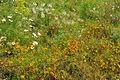 Flowers in Ironbridge (8535).jpg