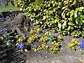 Flowers on High Street, Caergwrle (2).JPG