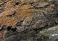 Fold in Cliffs near Bruce's Haven - geograph.org.uk - 1946173.jpg