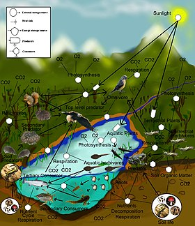 freshwater aquatic and terrestrial food web.