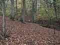 Footbridge in Beech Wood - geograph.org.uk - 1594297.jpg