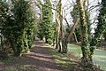 Footpath by the rec - geograph.org.uk - 1209486.jpg