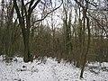 Footpath in Twenty Acre Shaw - geograph.org.uk - 2195935.jpg
