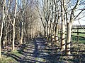 Footpath in the wood - geograph.org.uk - 1630705.jpg