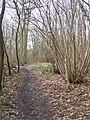 Footpath through Brick Kiln Wood - geograph.org.uk - 1207566.jpg
