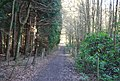 Footpath through Hilly Wood - geograph.org.uk - 1803430.jpg