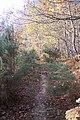 Footpath through gorse in Denstead Wood - geograph.org.uk - 1584176.jpg