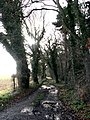 Footpath to Bodham Common - geograph.org.uk - 642649.jpg