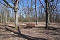 Forêt Départementale de Beauplan à Saint-Rémy-lès-Chevreuse le 14 mars 2018 - 16.jpg