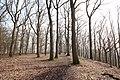 Forêt Départementale de Beauplan à Saint-Rémy-lès-Chevreuse le 21 février 2018 - 03.jpg