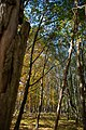 Forêt de Rambouillet — automne 2018 (9).jpg