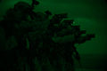 Force Reconnaissance Detachment close quarters tactics qualification 140619-M-CB493-008.jpg