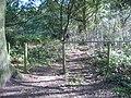 Forest Covert - geograph.org.uk - 1022066.jpg