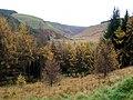Forest and Cwm Irfon, Powys - geograph.org.uk - 1069824.jpg