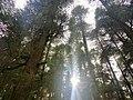 Forest around Hidimba temple.jpg