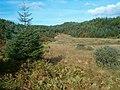 Forest lochan - geograph.org.uk - 245856.jpg