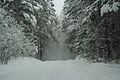 Forest near Ob river in Altai Region 33.JPG