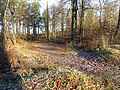 Forest of Dean near Edge End - geograph.org.uk - 1095433.jpg
