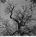 Fotothek df ps 0001835 Bäume.jpg