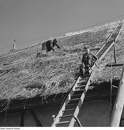Constructing a thatched roof in Thesenvitz