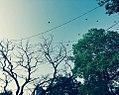 Free Blue Sky.jpg