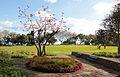 Funchal IMG 8686 (16929883287).jpg
