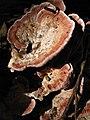 Fungi (4442282623).jpg