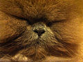 Furry Cat 0262.jpg