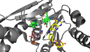 Formylation - Active site of PurN GAR transformylased in a complex with the folate based inhibitor 5-deaza-5,6,7,8-tetrahydrofolate (5dTHF). The α-amino group of GAR (Pink) is located in a position which would attack a N10-formate group on the folate based inhibitor (yellow). Asn 106, His 108, and Asp 144 are colored green. Rendered from PDB 1CDE.