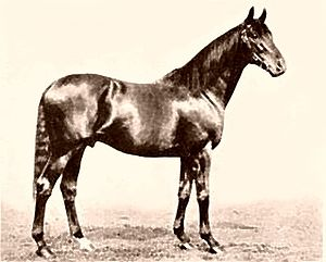 Gainsborough (horse) - Image: Gainsborough (GB)