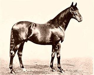 Gainsborough (horse) British-bred Thoroughbred racehorse