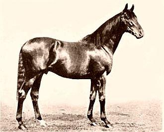 Gainsborough (horse) - Image: Gainsborough (GB)