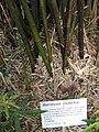 Gardenology.org-IMG 0920 rbgs10dec.jpg