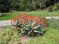 Gardenology.org-IMG 4228 hunt0904.jpg