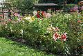 Garten Juli 2014 (15466901096).jpg