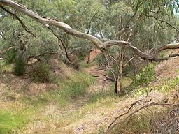 Gawler River at Angle Vale when dry.JPG