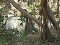 Gedaga (Telugu- గేదగ) (2391962210).jpg