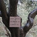 Gethsemane, Mount of Olives in Jerusalem 07.jpg