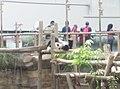 Giant Panda Conservation Centre in Zoo Negara Malaysia 2021 (23).jpg